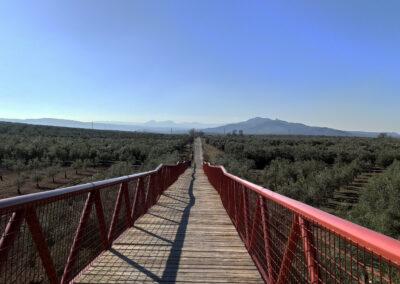 Vía Verde del Aceite: Campo Real a Moriles